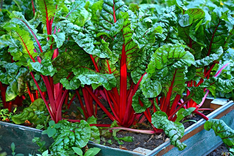 Comment planter des légumes divers?